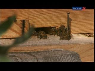 Лето в Башкирии: как готовят кумыс, добывают дикий мед...